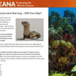 QA & Error Resolution for Ocean Conservation Nonprofit's Donation Campaigns
