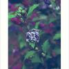 """In My Father's Garden II"" Art Prints"