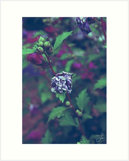 In My Father's Garden II - Art Prints 16x20