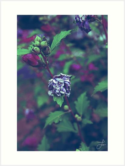 In My Father's Garden II - Art Prints 18x24