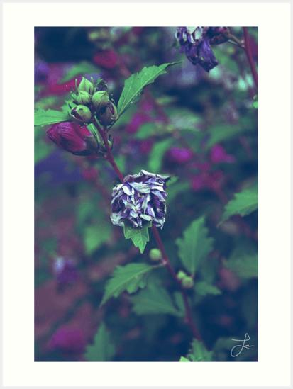In My Father's Garden II - Art Prints 24x32